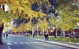 中国人民大学校景