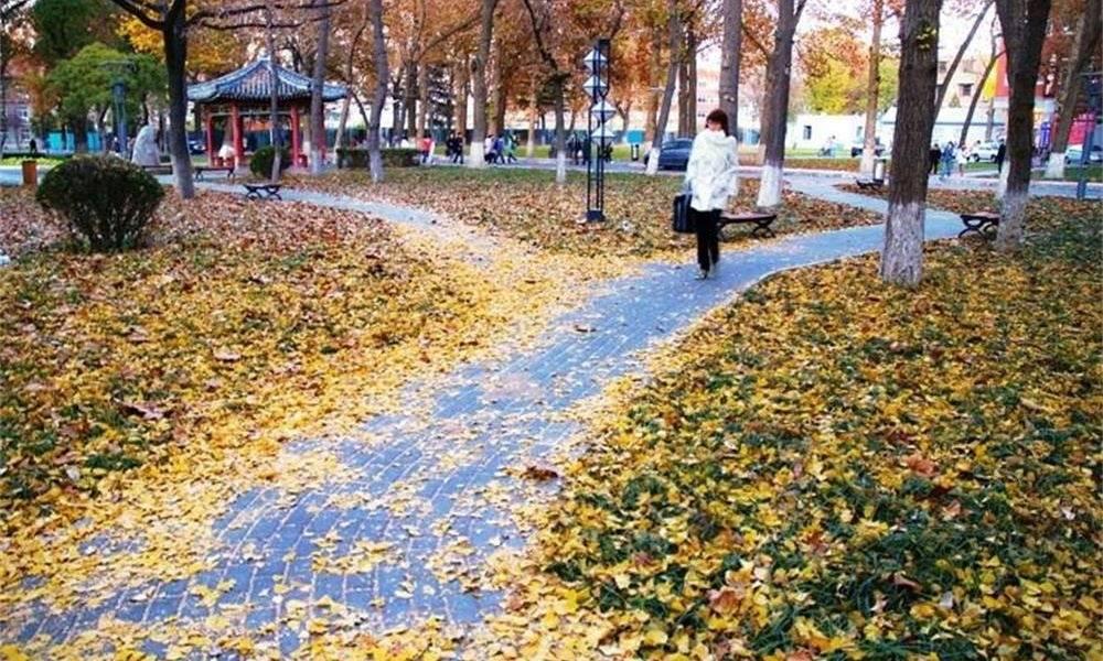 秋季的中国传媒大学