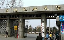 东北农业大学正门