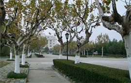上海外国语大学校景