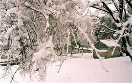 合肥工业大学雪景