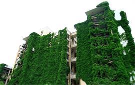 贵州大学绿景
