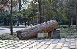 西北大学硅化木