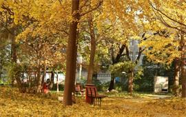 中国中医科学院校园秋景